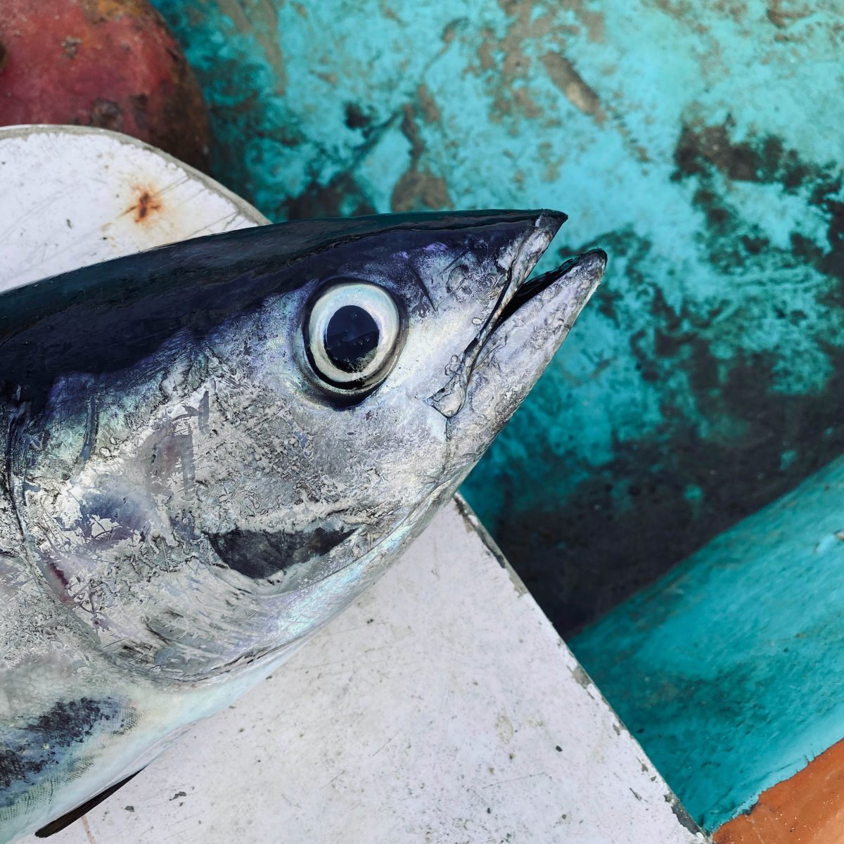 Ahi Tuna Fish