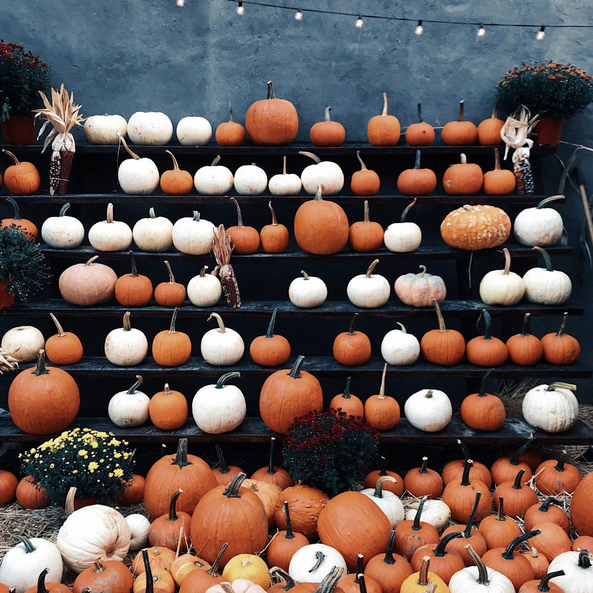 Pumpkin spiced